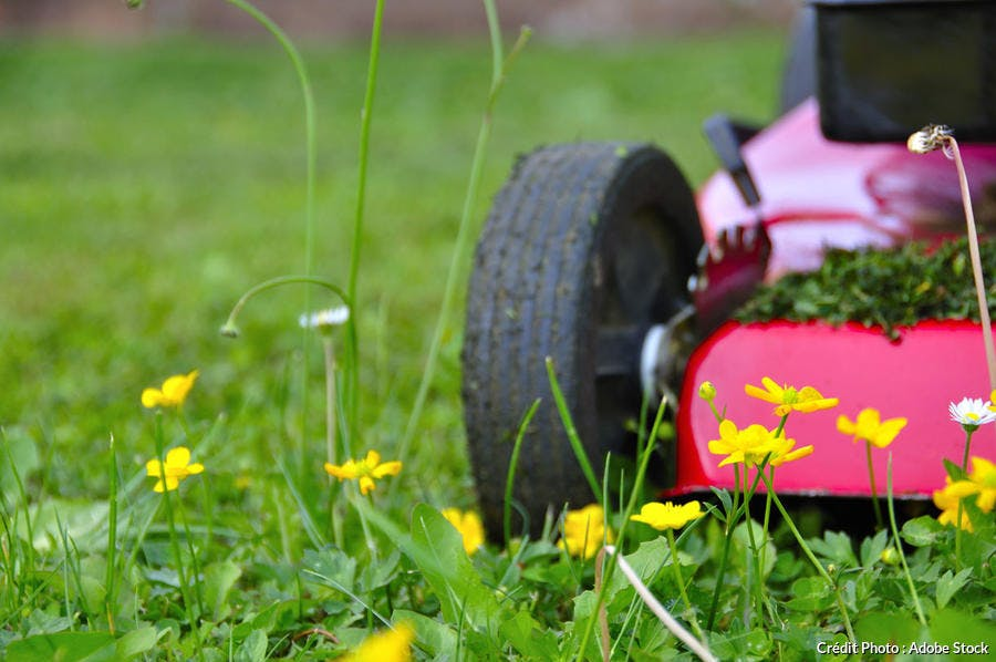 Tondeuse dans la pelouse avec fleurs