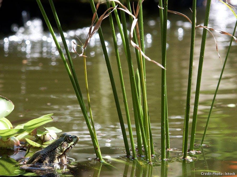 djweb_amphibien_istock_1944367_large.jpg