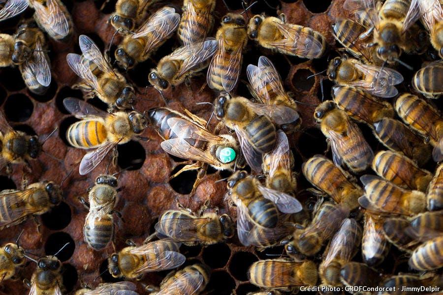 djweb_apioct_abeilles.jpg
