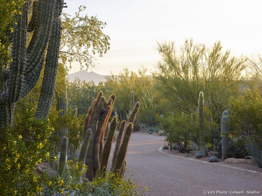 djweb_cactus_cameldale1503-105.jpg