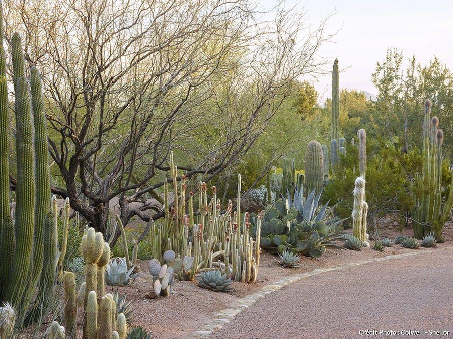 djweb_cactus_cameldale1503-106.jpg