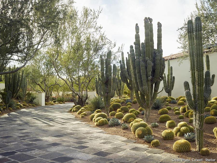 djweb_cactus_cameldale1503-238.jpg