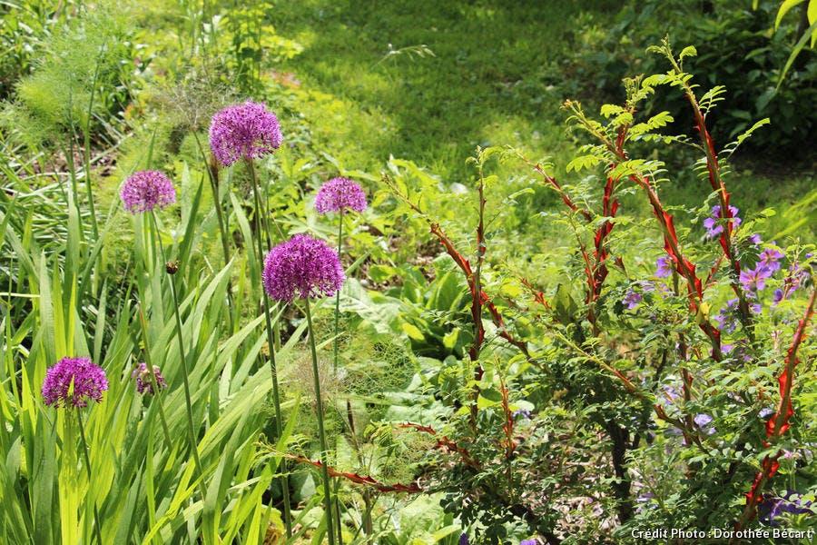 Alliance étonnante aux jardins de Ceffonds