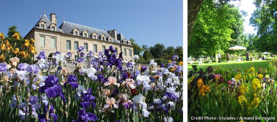 Irisiades d'Auvers-sur-Oise