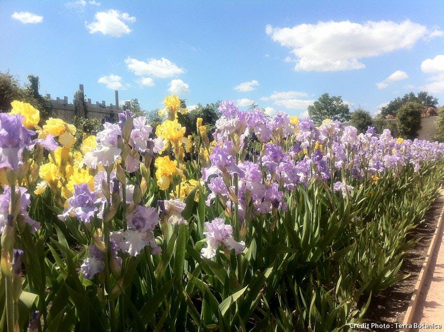 djweb_iris_terra_botanica_img_1486.jpg
