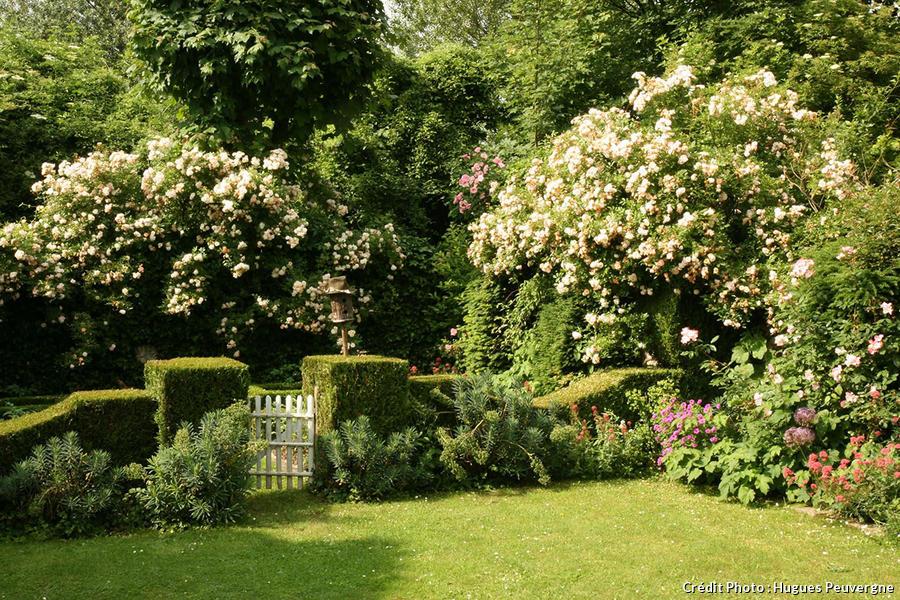 djweb_jardinhugues_buis.jpg