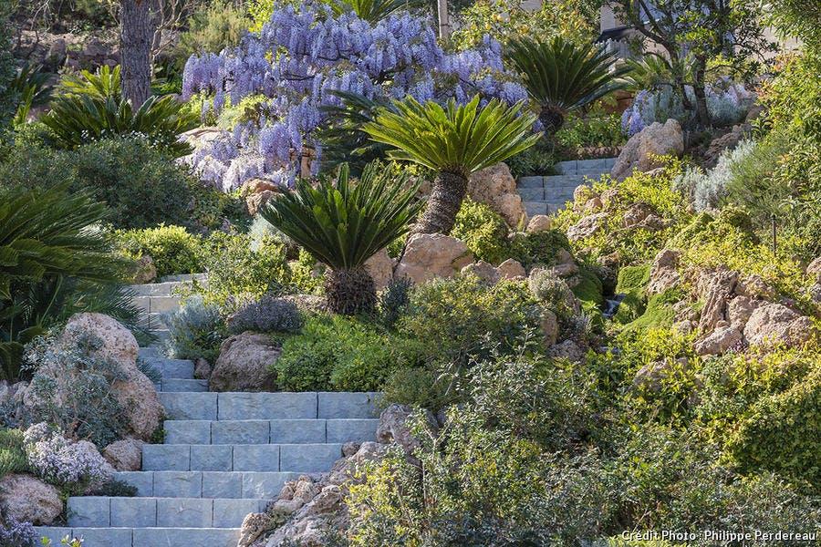 Plantes et arbustes pour jardin provençale
