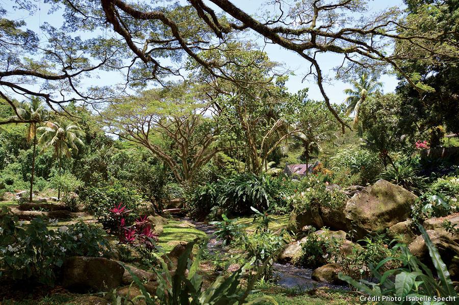 Les 7 plus beaux jardins de Martinique à visiter d\'urgence ...