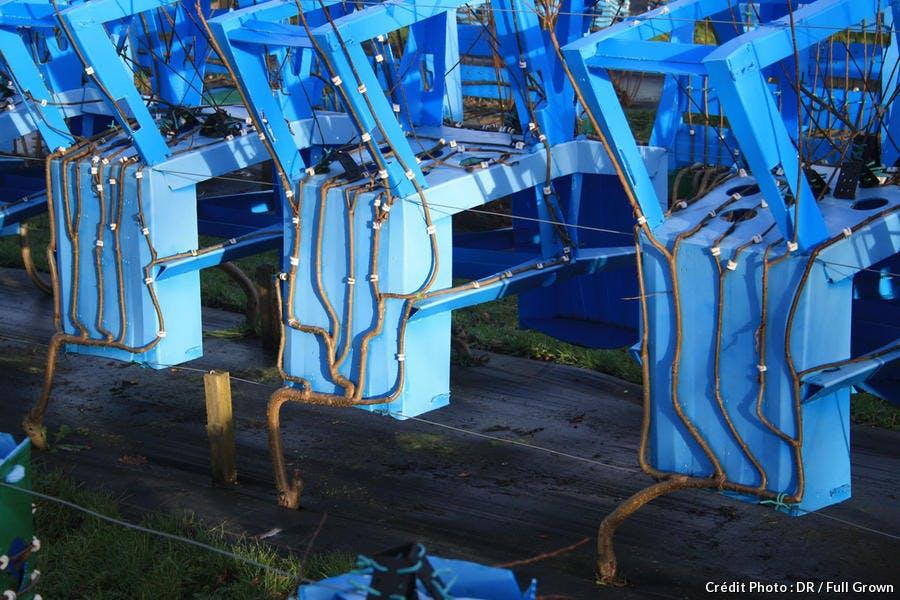 Le champ de chaises de Gavin Munro