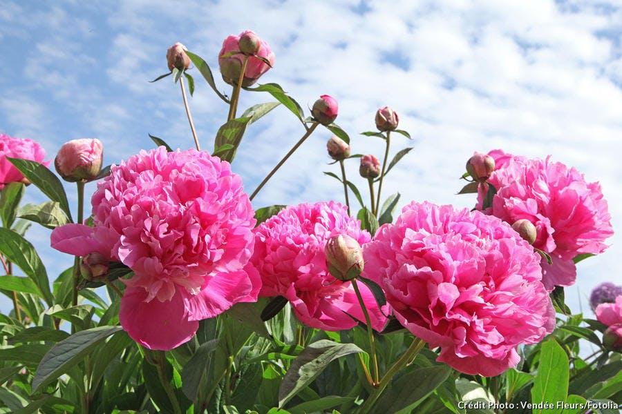 Vendée Fleurs