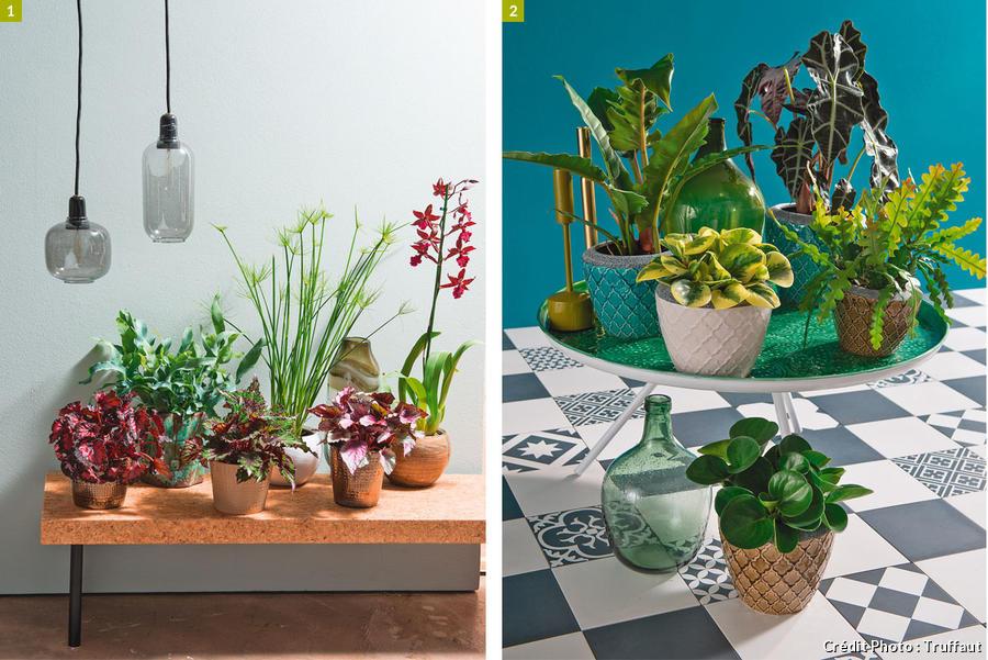 Cinq Idees Pour Mettre En Scene Vos Plantes D Interieur