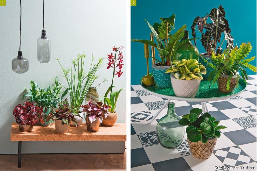 Différentes plantes d'intérieur