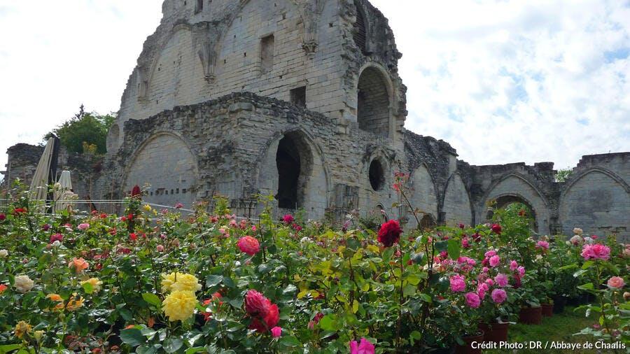 Roses à l'abbaye de Chaalis