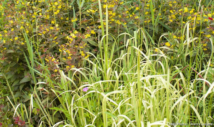 Plantes qui résistent au froid