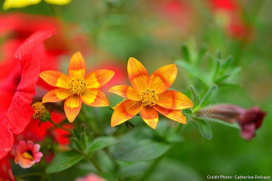 jardiniere_rouge_dsc_8504_cd.jpg