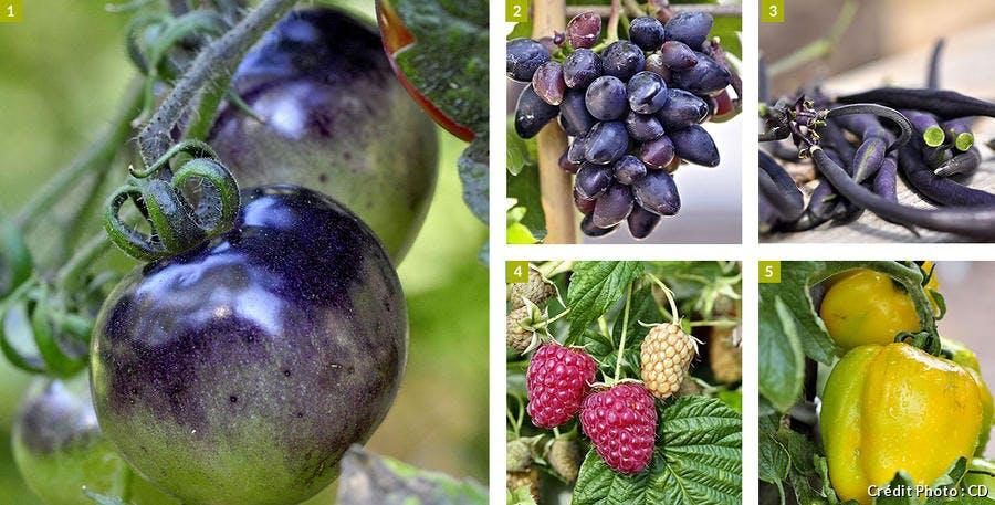 5 fruits et légumes originaux
