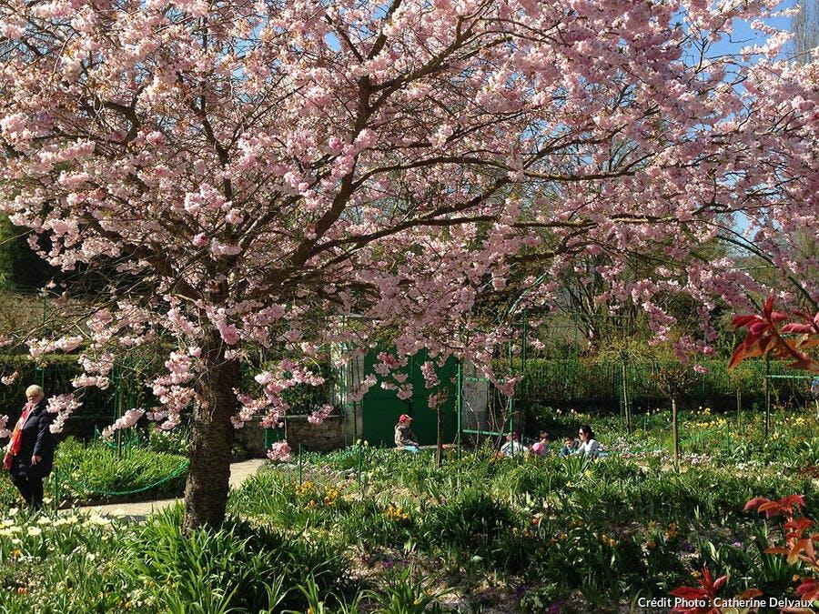 arbres en fleurs Giverny