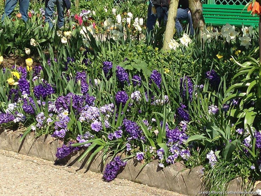 giverny printemps
