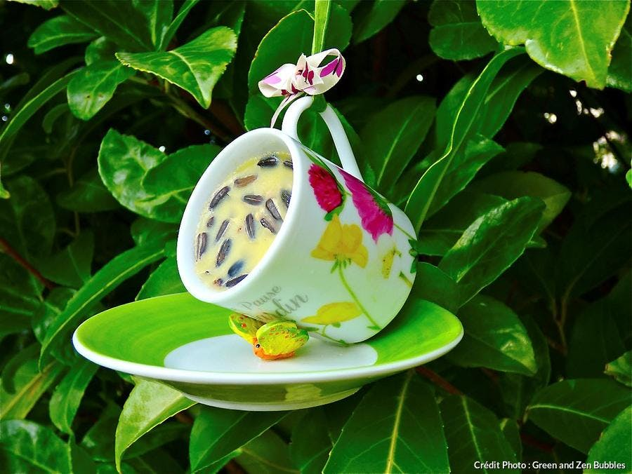 mangeoire à oiseau avec une tasse