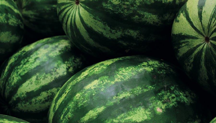 Cueillir le melon d'eau