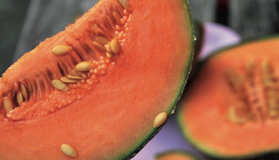 Melon mûr après cueillette
