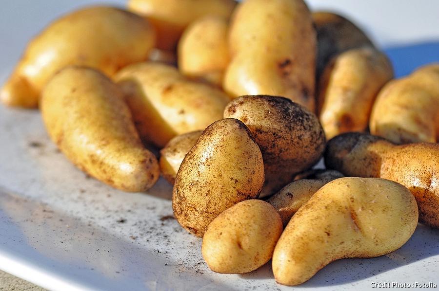 Pommes de terre 'Ratte'
