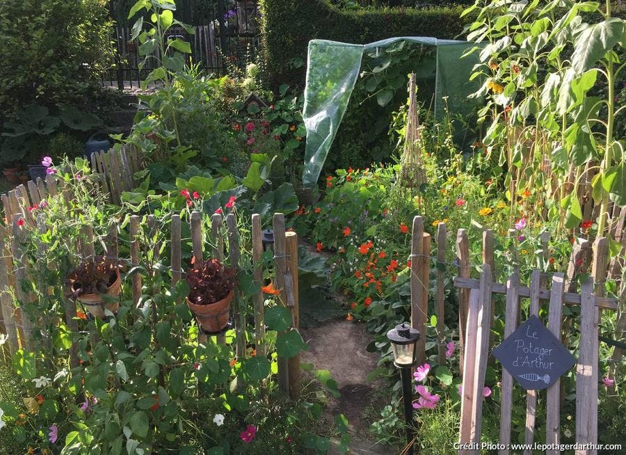 Un potager dans un petit jardin