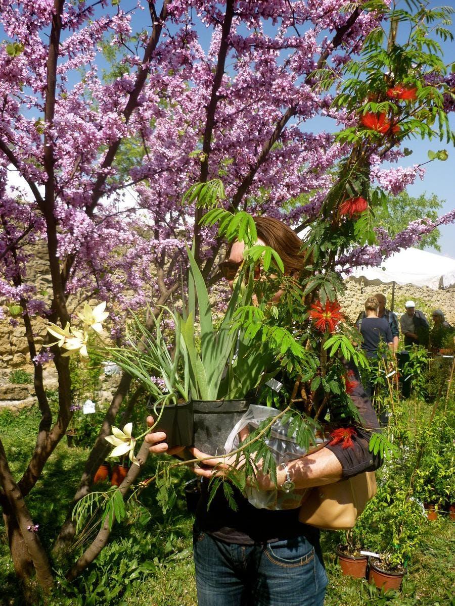 plantes-rares-et-jardin-naturel-4.jpg