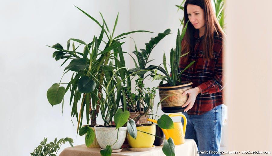 surveiller ses plantes d'intérieur