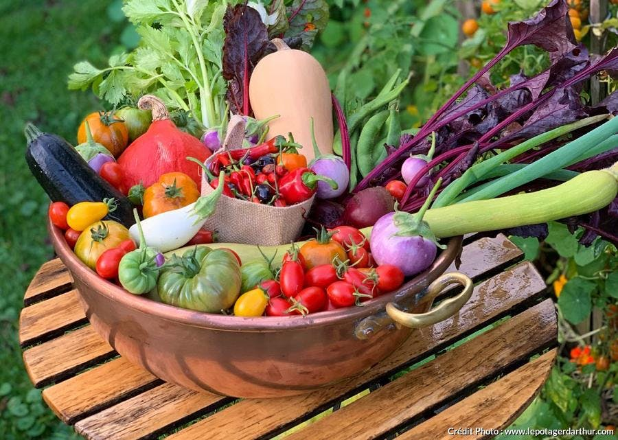 Récolte de légumes d'été