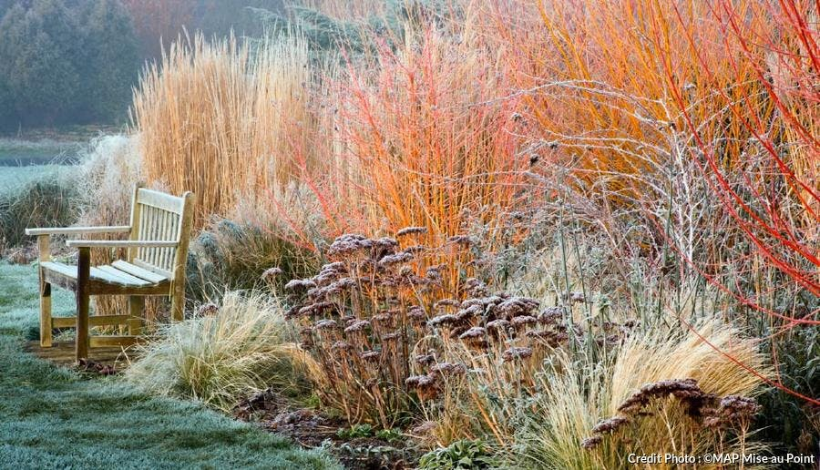 jardin hiver ronce tibet