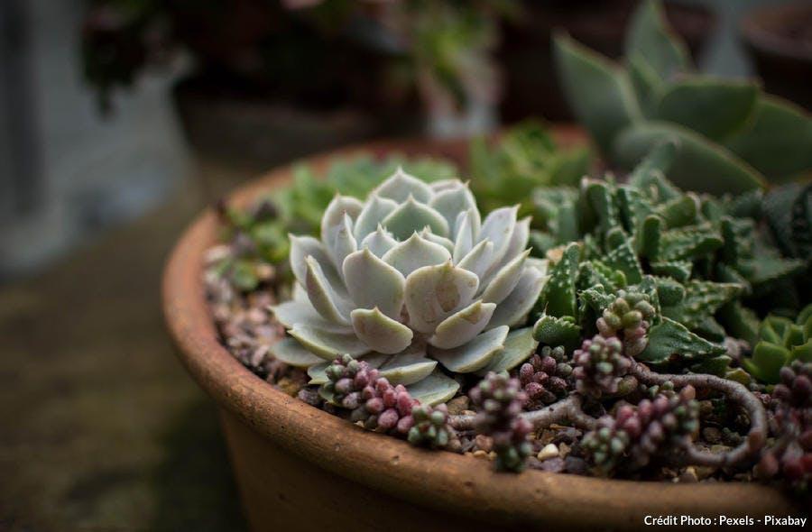 Succulente pot