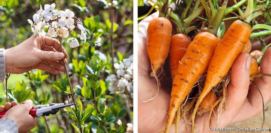 taille, élagage et récoltes
