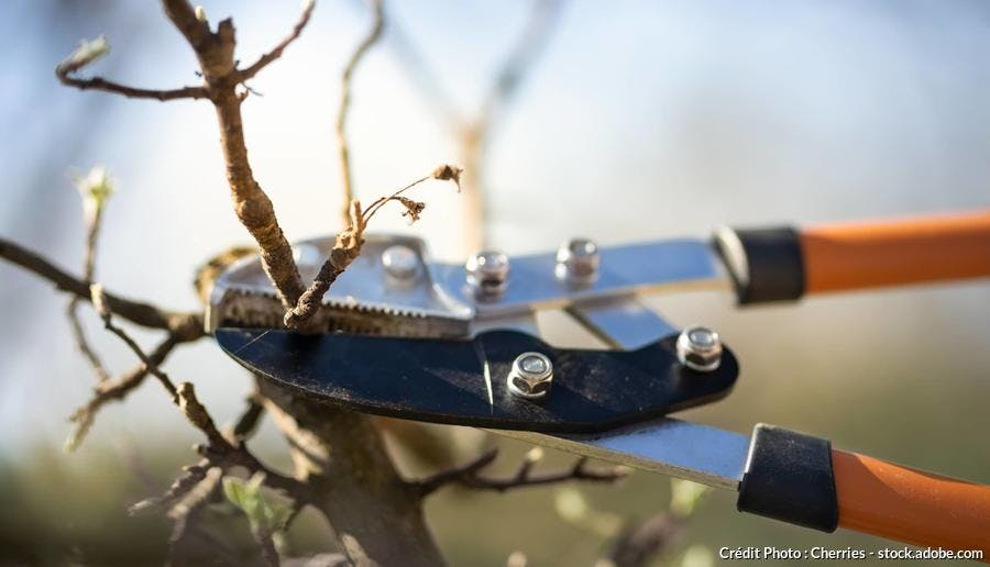 Tailler prunier