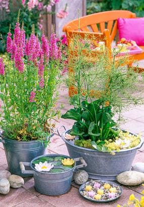 3 jardinières pour la terrasse avec des plantes aquatiques