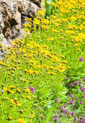 9 plantes pour des bordures qui fleurissent longtemps