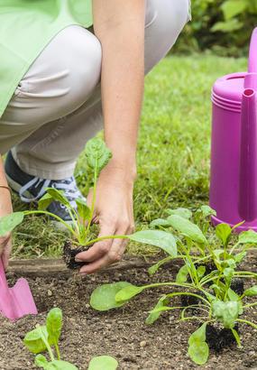 Quels légumes planter à l'automne pour des récoltes express