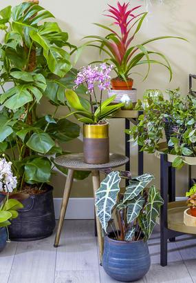 12 plantes vertes pour décorer votre intérieur