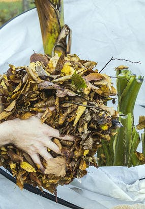8 astuces pour protéger les plantes avant l'hiver
