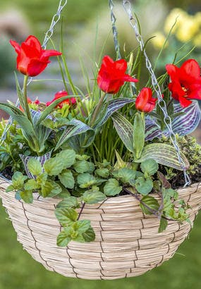 Comment faire une suspension de fleurs ?