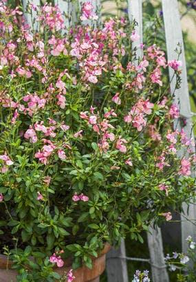 8 plantes fleuries très robustes
