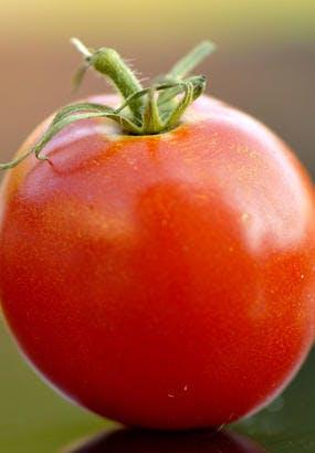 Tomate Fandango : culture, semis, avis