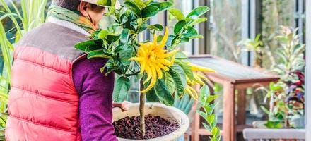 Rentrer plantes en hiver
