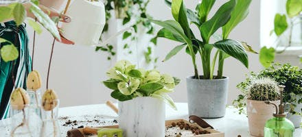 Arroser ses plantes d'intérieur