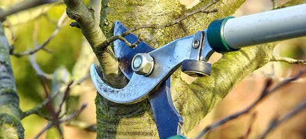 Tailler arbre