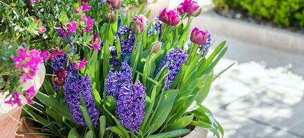 jardinière printemps