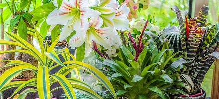 Associer plantes intérieur