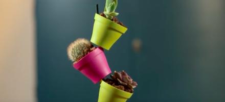 cascades de pots avec succulentes et cactus