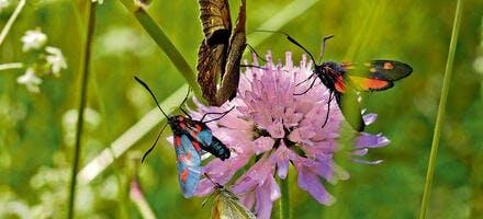papillons sur fleurs