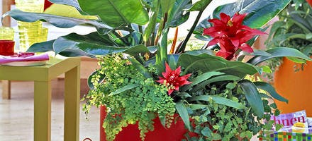 Association de plantes d'intérieur